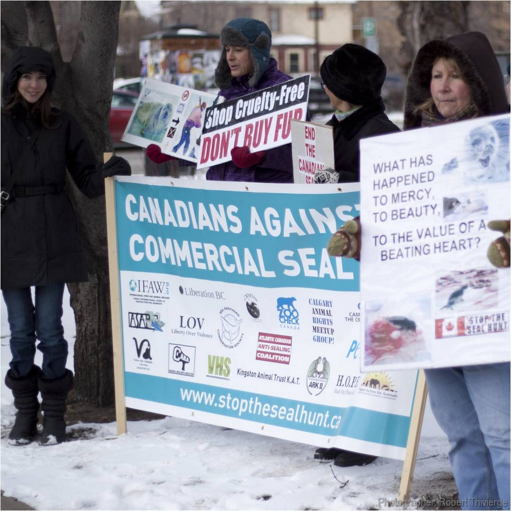 Fighting the Seal Hunt