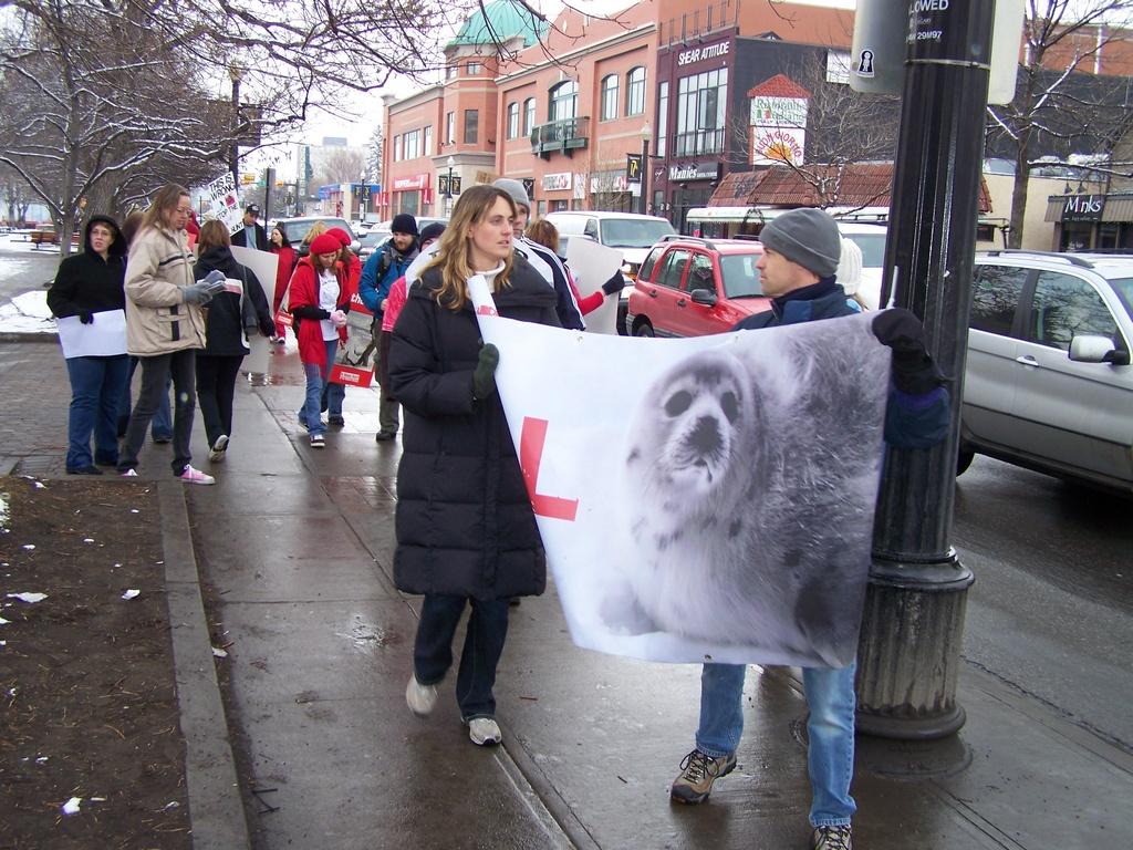 Seal hunt demonstrators on 17th