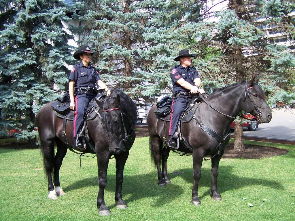 Calgary police on horseback