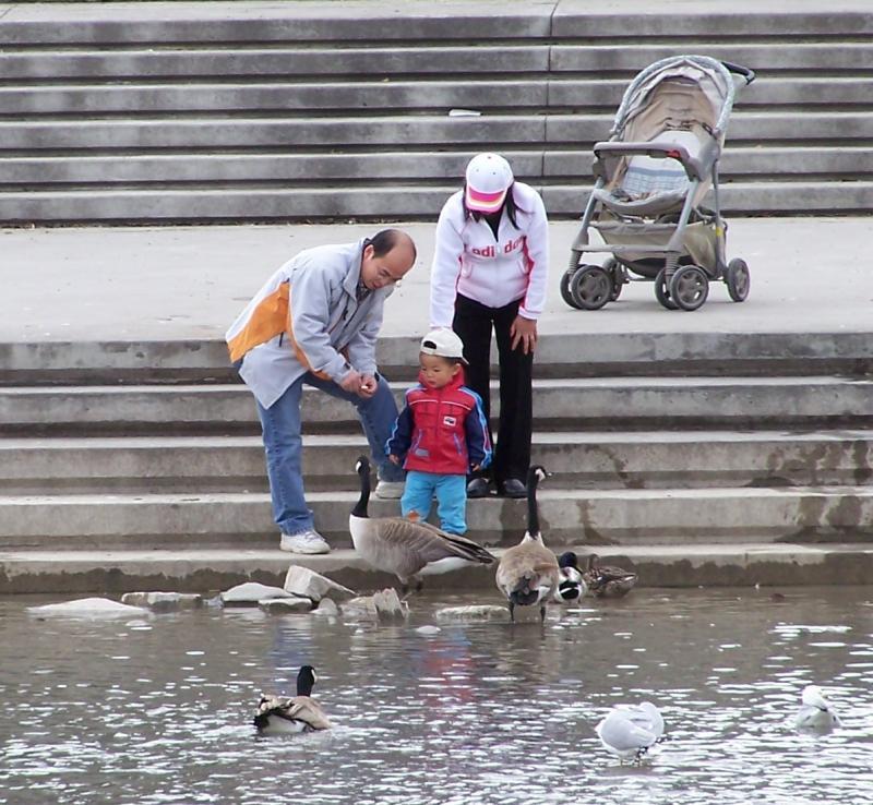 Family feeding birds