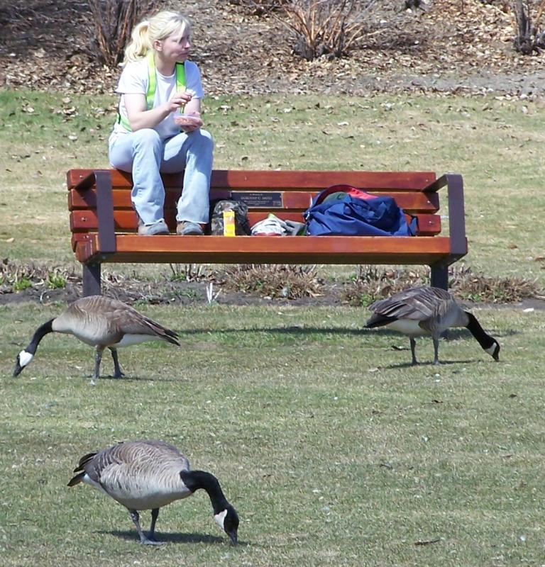Birds by the bench