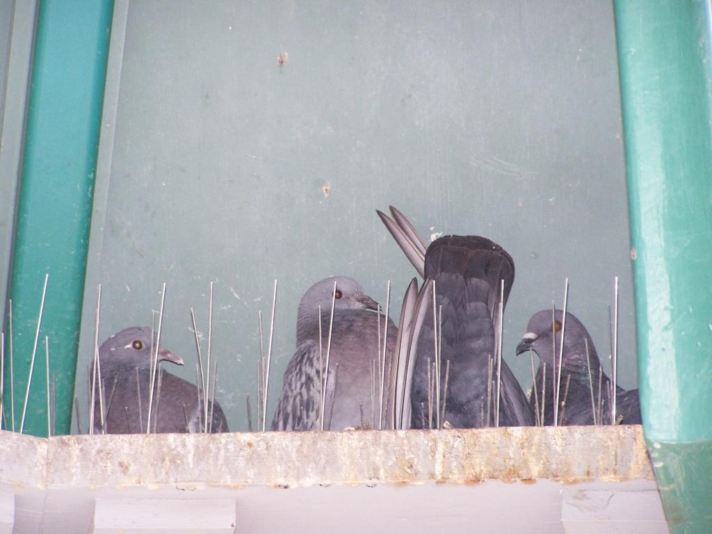 Pigeon crib walls