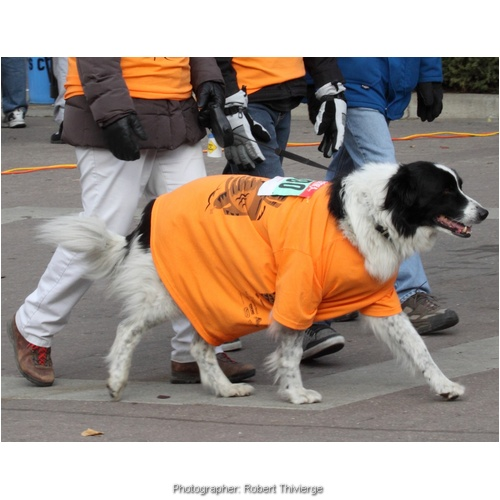 Canine walking to the finish