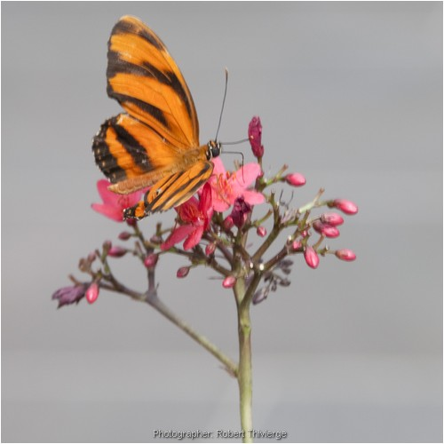 Jast another butterfly