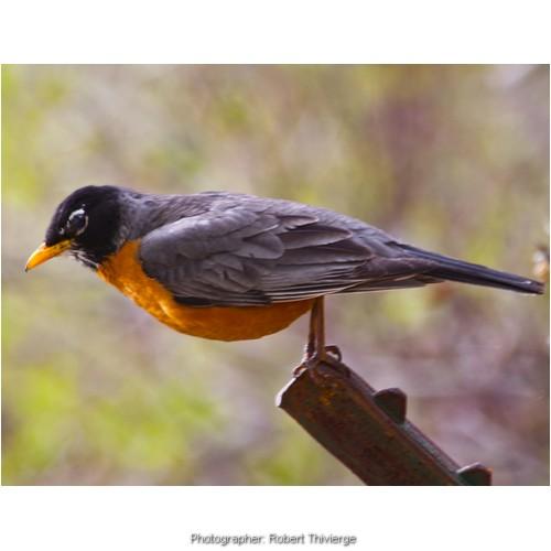 Bird on an angle