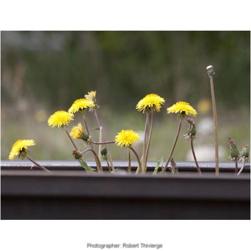 Flower Tracks