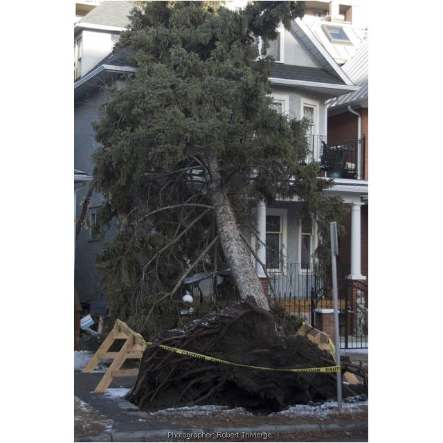 If a tree falls in the city...